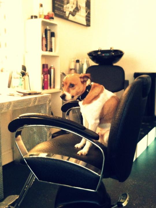 Hund beim Friseur