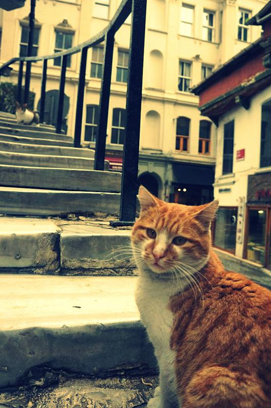 Katzentreppe in Istanbul