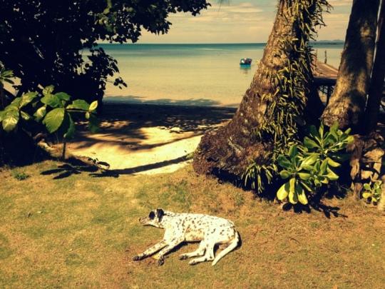 Mittagsschlaf im Paradies