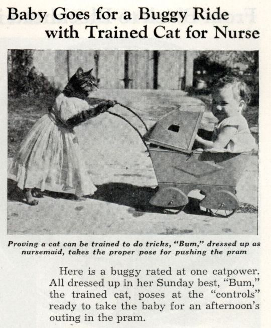 August 1938: Baby goes for a buggy ride with trained cat for nurse, pic via retronaut