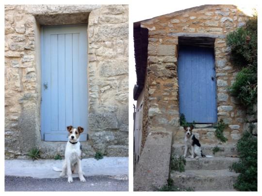 animalicious_Poppy_ante_portas