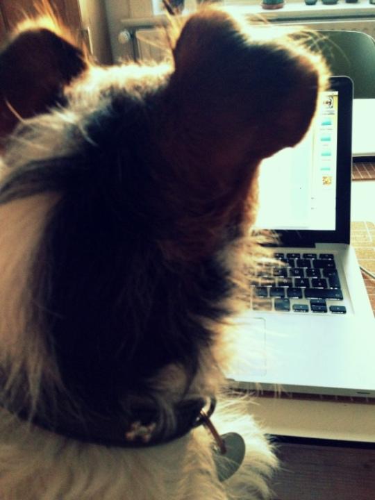 animalicious_Bürokollegin