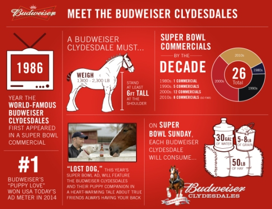 Infographic via Anheuser-Busch The Budweiser Clydesdales